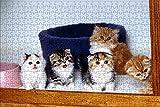 LHJOY Puzzle niña Puzzle 500 Piezas Gatito Gato Animal Regalo de cumpleaños 52x38cm