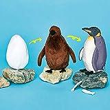 tianluo Peluches Juguete De Peluche De Crecimiento De Pingüino Triple Cambio El Proceso De Nacimiento De Pingüino Osaka Acuario Pingüino Muñeca Figuras Mutable