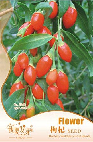 Big Sale! 50 pcs/sac pomme rose Graines rares Chine fruits Graines de jardin Plantation Easy Grow, 0Vgqep