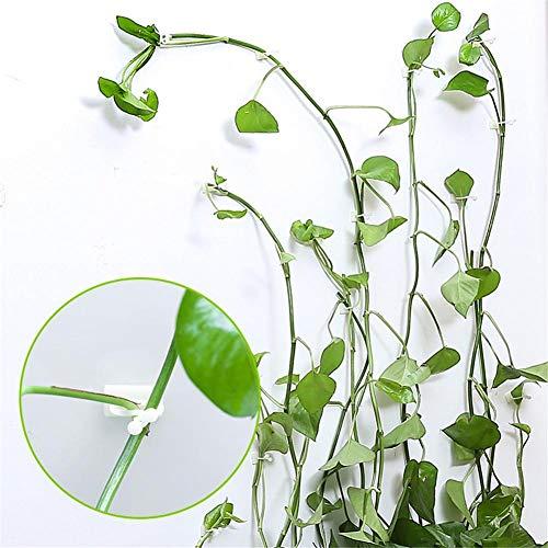 Sunnyushine Clips Muraux pour Plantes Grimpantes, Support De Légumes De Jardin Clip De Fixation Crochet Auto-adhésif pour Fournitures De Plante De Vigne, 100pcs