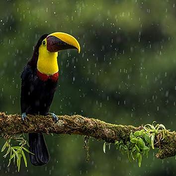 Birds In Rain
