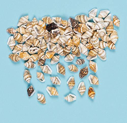 Baker Ross Mini-Muscheln zum Basteln- für Kinder - Dekoration (Packung mit 200 Stück)