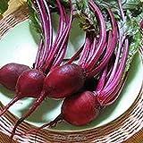 50Pcs / Bolsa Semillas De Remolacha No Gmo Sweet Red High Vitamins Ruby Queen Seeds Para Semillas De Jardín De Plantas Caseras Semillas de remolacha