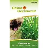 Katzengras Samen - Avena sativa und Lolium perenne - Katzengrassamen - 10 g Saatgut für etwa 5 Töpfe