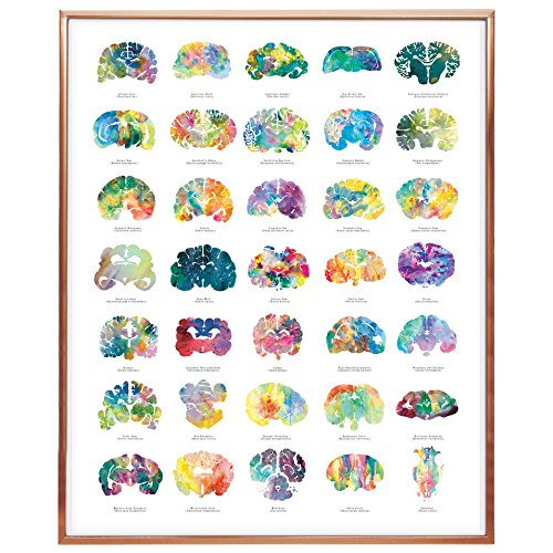J. Sayuri 16' x 20' Brain Art Poster - Colorful Neuroscience, Neurology, Veterinary and Psychology Artwork and Gifts - Great for Therapy Practices - Graduation Gift and Medical Wall Decor Art