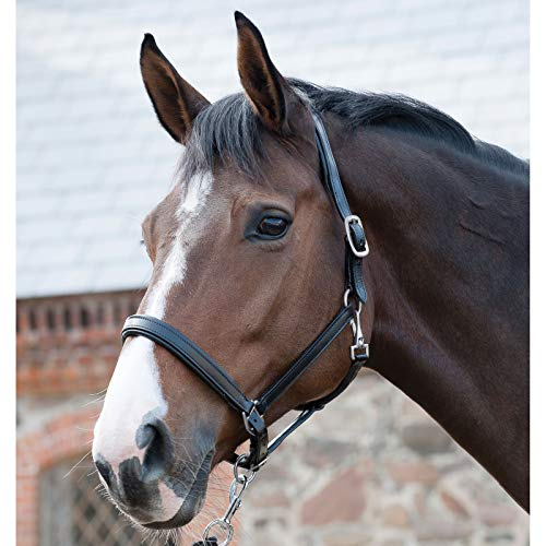 CATAGO Lederhalfter - schwarz - Pony