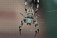 LHJOY 大人用ジグソーパズル1000個スパイダー昆虫動物子供向けバースデーギフトとホリデーギフト 75x50cm