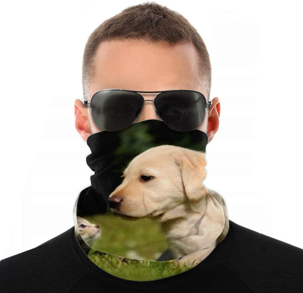 Headbands For Men Women Neck Gaiter, Face Mask, Headband, Scarf Cat Dog Turban Multi Scarf Double Sided Print Bandana Headband For Women For Sport Outdoor