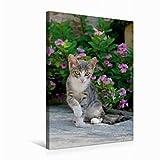 CALVENDO Niedliches Katzenkind vor rosa Blüten