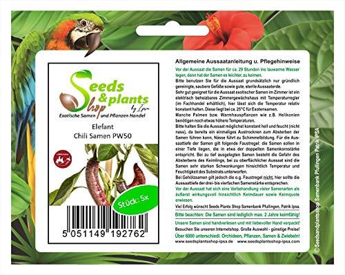 Stk - 5x Elefant- Samen Saatgut Küche Garten Chili samen Chili PW50 - Seeds Plants Shop Samenbank Pfullingen Patrik Ipsa
