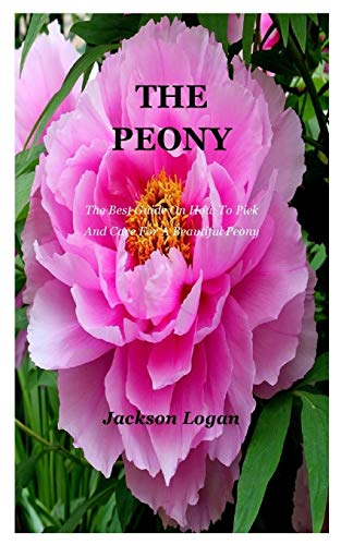The Peony: The Best Guide On How To Pick And Care For A Beautiful Peony