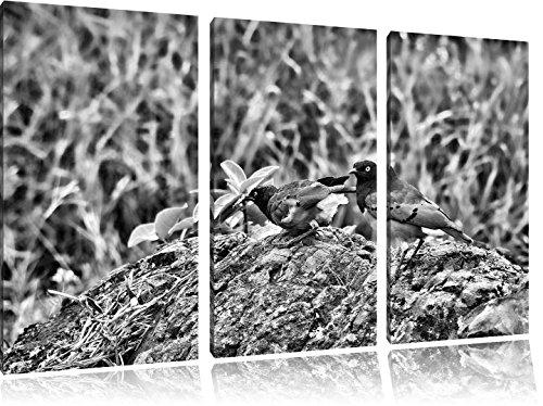 Vogels op een steenFoto Canvas 3 deel | Maat: 120x80 cm | Wanddecoraties | Kunstdruk | Volledig gemonteerd
