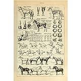 Meishe Art Poster Pferd Kunstdrucke Jahrgang Plakatdruck