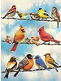 Juguetes educativos para adultos y niños Rompecabezas de Tangram Rompecabezas de madera clásico,1000 piezas para - Desafío de juegos educativos de pájaros coloridos en cables para niños - 50x75cm