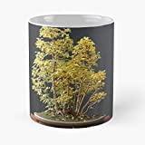 DOUTREE Fall Autumn Color Bonsai Leaves Forest Taza de café con Leche 11 oz