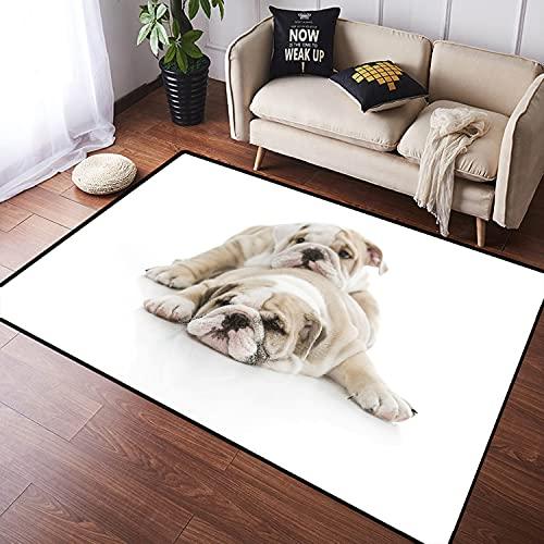 NANITHG Alfombra Salon Grandes Pelo Corto Cachorros de Bulldog inglés Lindo Jugando Aislado Suave Antideslizante Alfombras Dormitorio Modernas Lavables para Sala Habitación Infantil 100x160cm