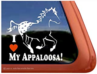 5.88 L X 11.88 W Inches Multicolor Lunarable Horses License Plate Legendary Appaloosa Pony and Sable Border Collie Runs Gallop in Winter Photo Print High Gloss Aluminum Novelty Plate