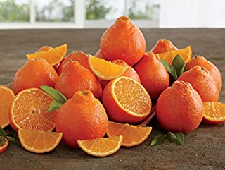 Rare Florida Honeybell Oranges Honeybell Tangelos Grove Fresh Three Trays, 30lbs
