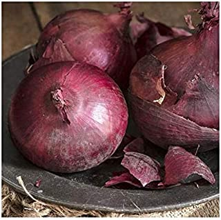 Ruby Red Onion Seeds