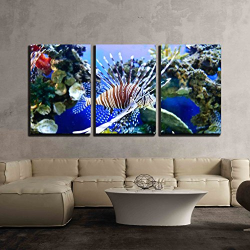 """wall26 - 3 Piece Canvas Wall Art - Marine Tropical Fish. Colorful Exotic Little Fish - Modern Home Art Stretched and Framed Ready to Hang - 16""""x24""""x3 Panels"""