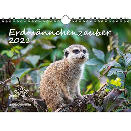 Erdmännchenzauber DIN A4 Kalender für 2021 Erdmännchen - Geschenkset Inhalt: 1x Kalender, 1x Weihnachts- und 1x Grußkarte (insgesamt 3 Teile)