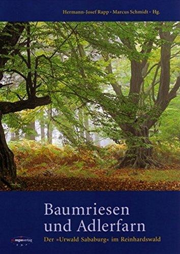 Baumriesen und Adlerfarn: Der