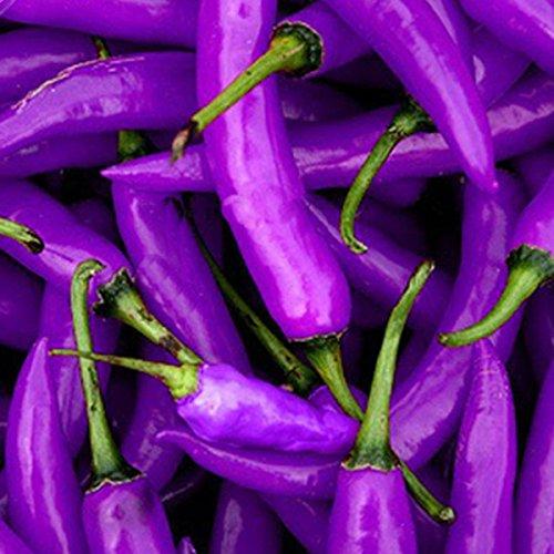 Best Garden Seeds Rare Hot Purple Cayenne Pepper Seeds. 20 seeds, organic vegetable garden house