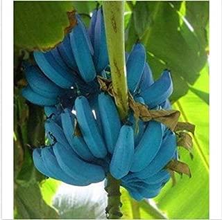 Best banana fruit tree Reviews
