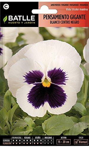 Semillas de Flores - Pensamiento Gigante blanco corazón negro - Batlle