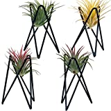 Pack of 4 Air Plant Holder Tillandsia Base, Modern Geometric Metal Air Plant Stand Airplant Display Rack, Tabletop Big Streptophylla Plant Display Table Hand for Home Office Decoration Supplies