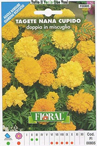 AGROBITS Tage Nana Cupido - AIUOLE Bordure Giardini ROCCIOSI-Floral - A SEMENTI