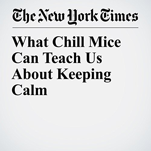 What Chill Mice Can Teach Us About Keeping Calm copertina