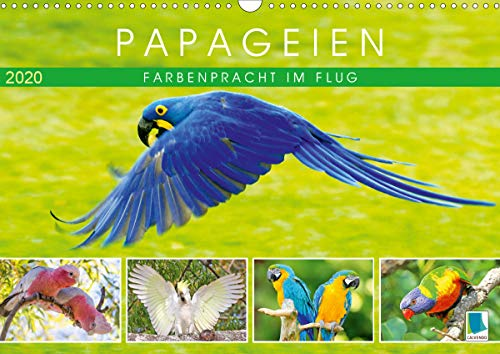Papageien: Farbenpracht im Flug (Wandkalender 2020 DIN A3 quer)
