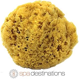 100% Natural Sea Sponge 5-6