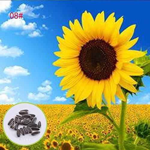 SummerRio 1 paquete de semillas de girasol multicolor Semillas de plantas Bonsai Semillas...