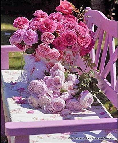 Kit de pintura de diamante 5D(Rosa silla rosa) DIY painting,Crystal Rhinestone de punto de cruz bordado artes manualidades suministros para decoración de la pared del hogar -Square_Drill_40x60cm