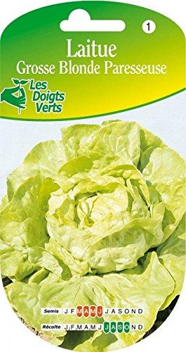 Les doigts verts Semence Laitue Grosse Blonde Paresseuse