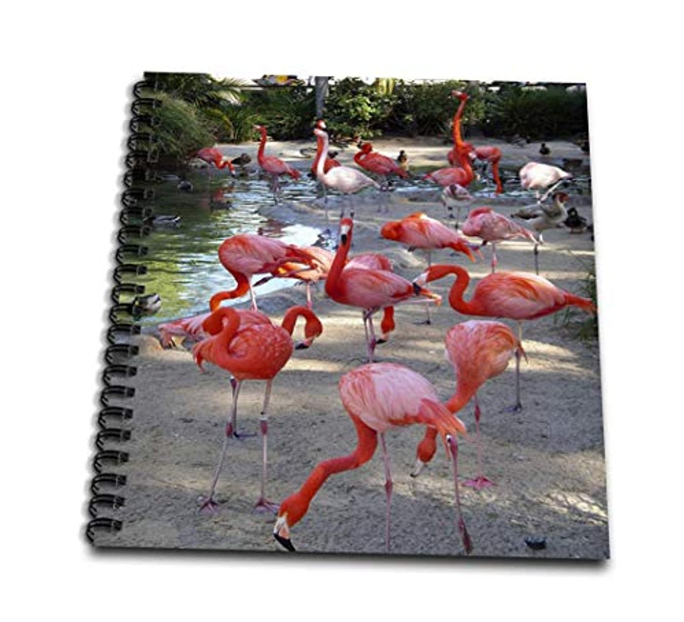 3dRose db_1223_2 Flamingos-Memory Book, 12 by 12-Inch
