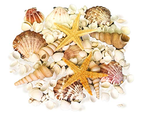 AVALON Mixed Sea shells Beach Shells White & Pink Seashells + 2 Starfish - includes Screw Shells, Strawberry Fan Scallops, White Cockles - Craft Shells for Display, Vase Filler, Craft Projects (#MH)