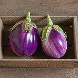 David's Garden Seeds Eggplant Rosa Bianca 2244 (Purple) 50 Non-GMO, Heirloom Seeds