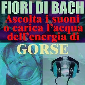 Gorse - (Ascolta i suoni o carica l'acqua dell'energia di Gorse)
