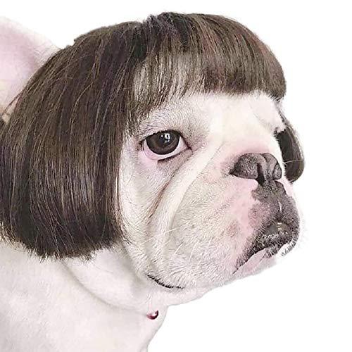 Pelucas de len para Mascotas, Accesorios para Perros medianos y Grandes, Pelucas para Perros, Accesorios Decorativos para el Cabello para Perros, Pelucas para Perros (con Cola) (B)