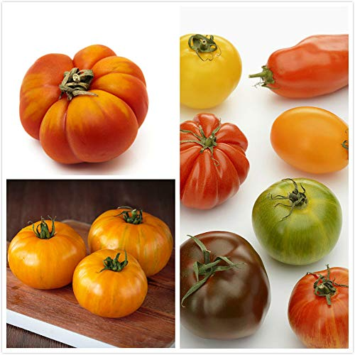 200pcs Mix Tomato Seed Colourful Different Shapes Delicious Vegetables DIY Gardening Non-GMO Tomato Seed Widely Planted Easy Care Annual Harvest