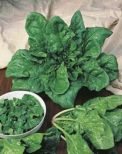 GETSO Samen-Paket: 25 - Seeds: Matador Viking Spinat Samt - Macht einen spannenden gesunden Salat !!!