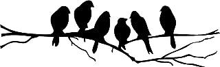 Best black bird 72 Reviews
