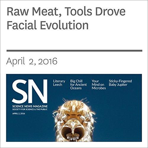 Raw Meat, Tools Drove Facial Evolution audiobook cover art