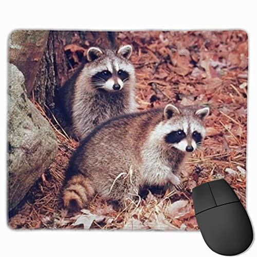 Pair of Racoon Wildlife Baby Gaming Mouse Pad Custom Rectangle Mousepad Computer Gaming Mouse Mat Non-Slip Rubber for Pc and Laptop