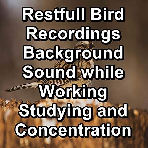 Bird Nature Sounds For YogaTo Help your Baby Sleep