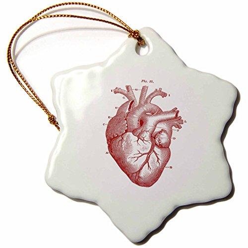 3dRose - Adorno de Copo de Nieve con diseño de Diagrama Victoriano del corazón, 7,6 cm