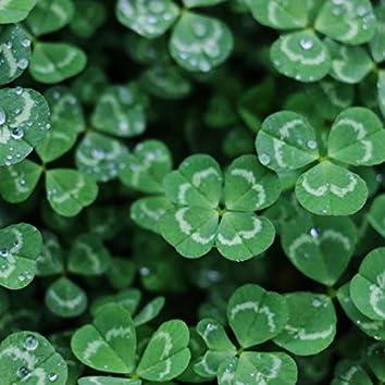 Celtic Clovers